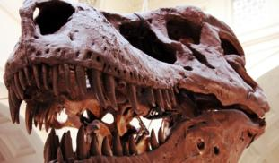 Cannibalism in Giant Tyrannosaurs